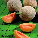 Melão Megelan e Hy-Mark
