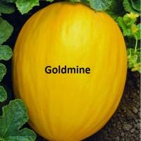 Melão Goldmine