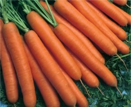 Semente Cenoura Híbrida Melissa (Topseed Premium) - 100.000 sementes