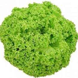 Semente Alface Amanda (Seminis) - 25.000 sementes