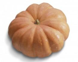 Semente Moranga Exposição (Horticeres) - 100 gramas